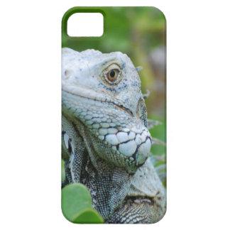 Peek-a-boo Iguana iPhone 5 Cover