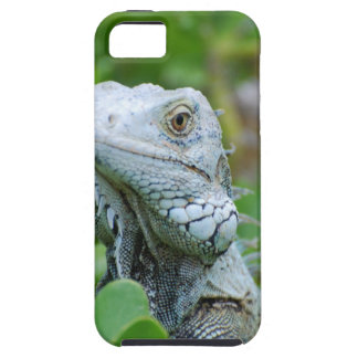 Peek-a-boo Iguana iPhone 5 Covers