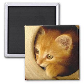 Peek-A-Boo! Kitten - Magnet
