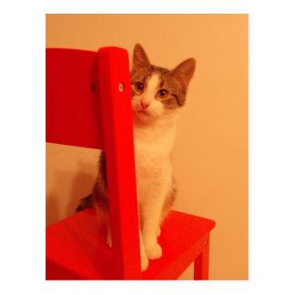 Peek a Boo Kitten Postcard