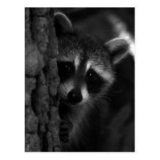 Peek-a-Boo Raccoon Postcard
