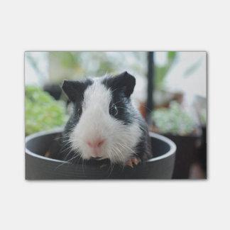 Peeking Guinea Pig Post-it® Notes