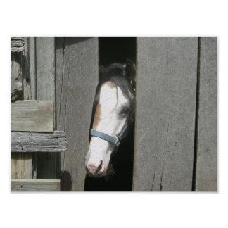 Peeking Horse Photo Print
