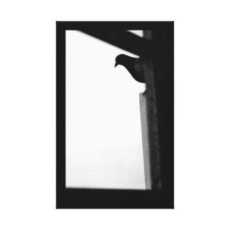 Peeking Pigeon Canvas Print