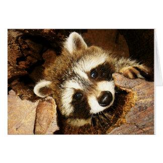 Peeking Raccoon kit,  Nature's comedian. Card