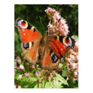 Peinture à l'huile de papillon carte postale