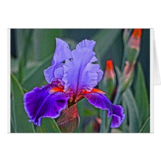 Peinture d'iris, nuances de pourpre avec l'accent  carte de vœux