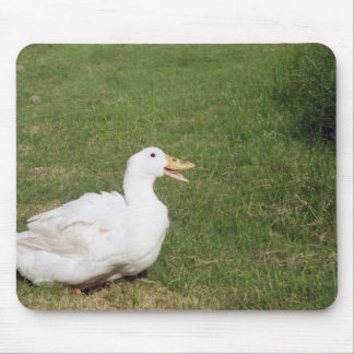 Pekin duck with open bill on green grass mouse pad