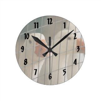 Pekin ducks in cage picture round clock