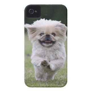 Pekingese dog blackberry bold case, cute photo