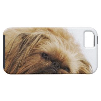 Pekingese dog, close up case for the iPhone 5