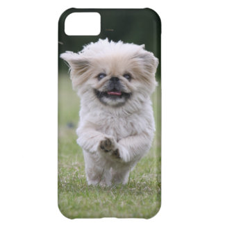 Pekingese dog iphone 5 case mate i/d, cute photo