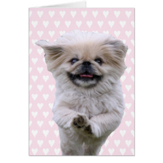 Pekingese dog running cute blank note card