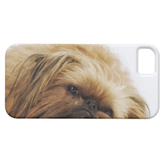 Pekingese Hund, nahes hohes iPhone 5 Case