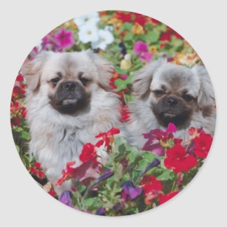 Pekingese Stickers