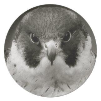 Pelegrine falcon in black and white plates