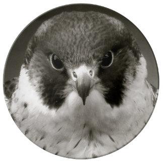 Pelegrine falcon in black and white porcelain plate