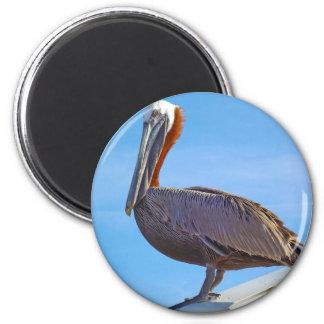 Pelican Again Magnet