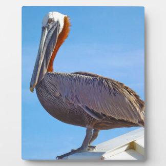 Pelican Again Plaque