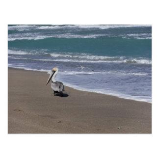 Pelican Beach Friends Postcard