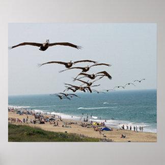 Pelican Bird Gang flying over OBX beach Poster