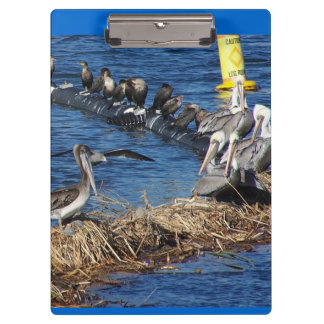 Pelican Birds Wildlife Animals Beach Ocean Clipboards
