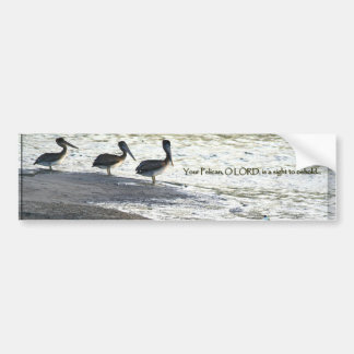 Pelican Birds Wildlife Animals Bumper Sticker