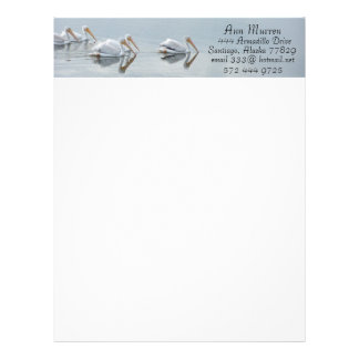 Pelican Birds Wildlife Animals Letterhead Design