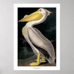 Pélican blanc américain par John James Audubon Posters
