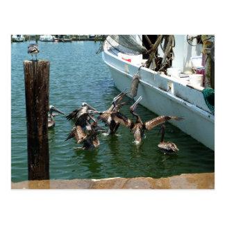 Pelican Brunch Postcard