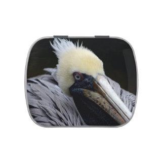 pelican close up head view bird