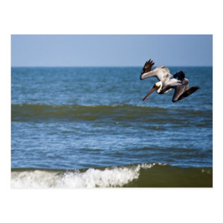 Pelican Diving Postcard