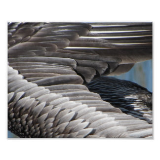 Pelican Feather Print on Archival Paper
