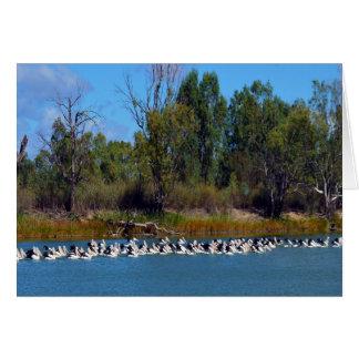 Pelican Fishing Frenzy, River Murray, Card