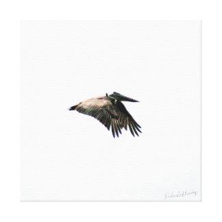 Pelican Flight | Ft. Myers, FL | 24x24 Canvas