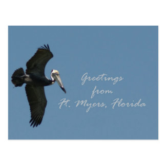 Pelican greetings from Ft. Myers Postcard