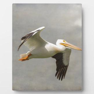 Pelican In Flight Plaque