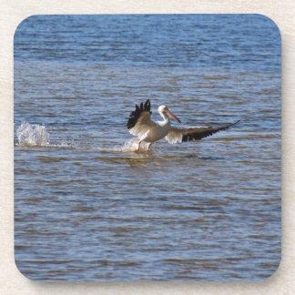 Pelican Landing Coaster