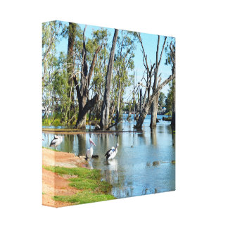 Pelican Oasis Berri Riverland South Australia, Canvas Print