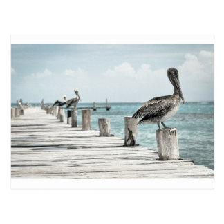 Pelican on Pier Postcard