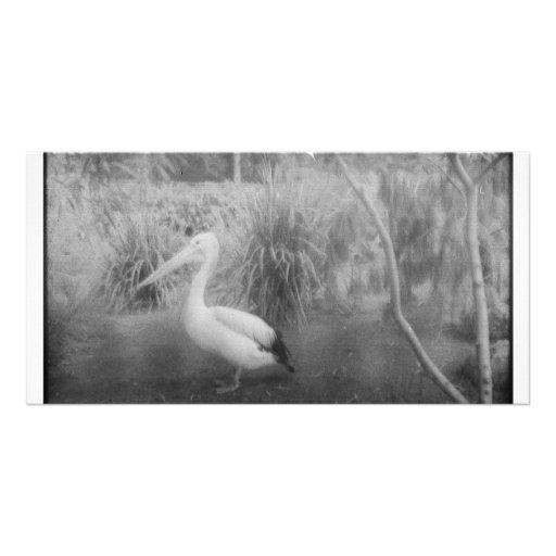 pelican photo greeting card