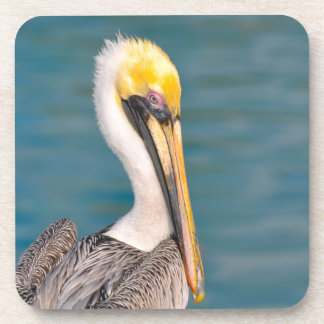 Pelican Portrait Close Up with Ocean in Background Coaster