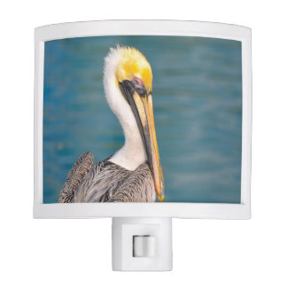 Pelican Portrait Close Up with Ocean in Background Night Lites