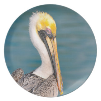 Pelican Portrait Close Up with Ocean in Background Plate