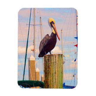 Pelican postcard magnet