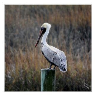 Pelican Poster, Pelican Art, Wall art, Poster