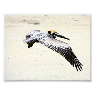 Pelican Print, Wall Art, Gifts, Beach Birds Photo Print