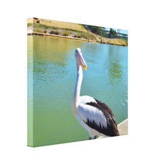 Pelican River Murray Mildura, Canvas Print