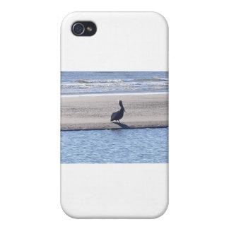 Pélican - Sc d'île de Seabrook Étui iPhone 4