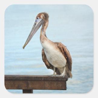 Pelican Square Sticker